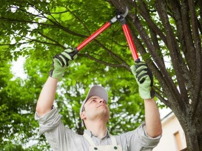 The Importance of Tree Pruning in Silverdale